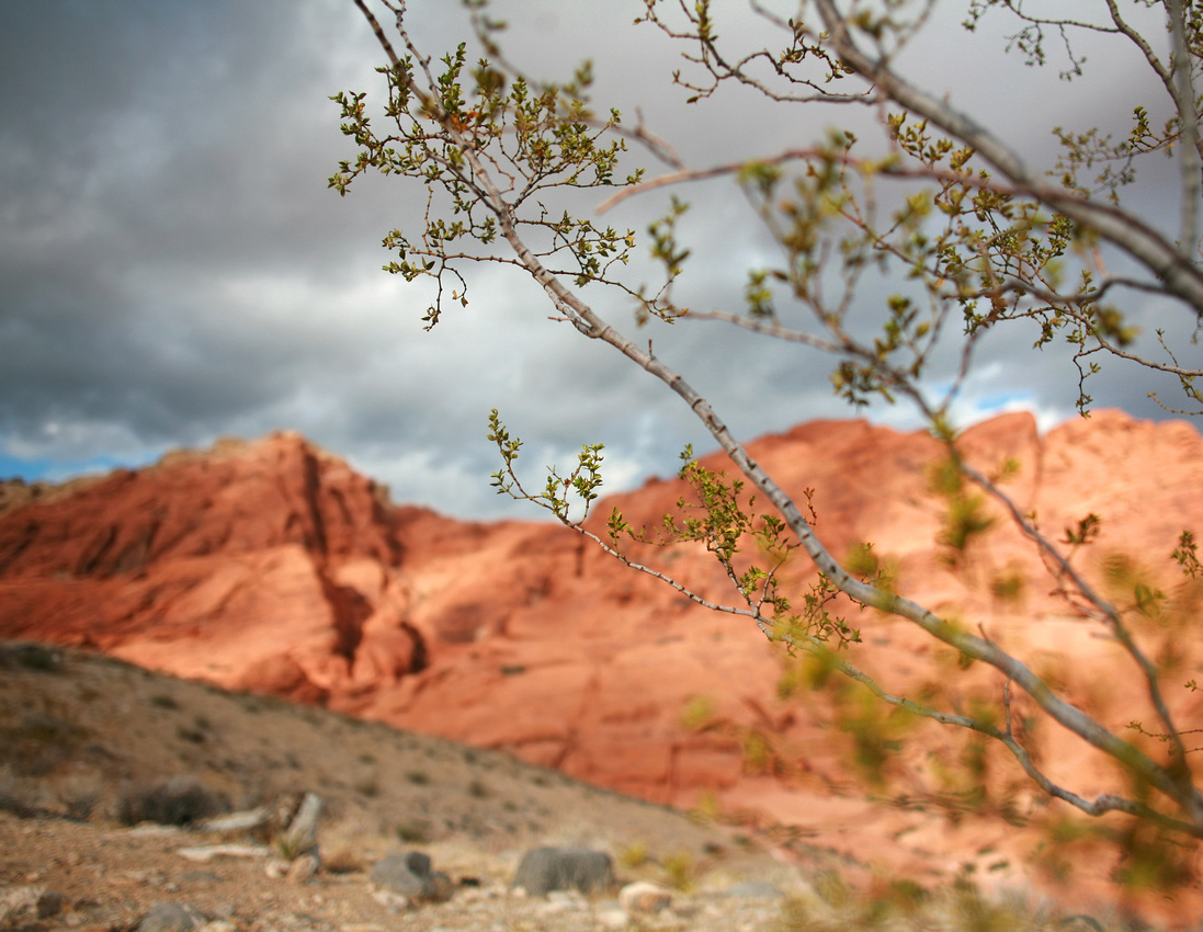 """View in Red Rock Canyon"""